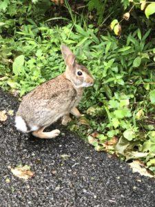 A photo of a rabbit.